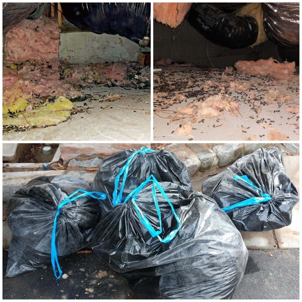 Crawlspace Cleanup / Rodent Nest Cleanup