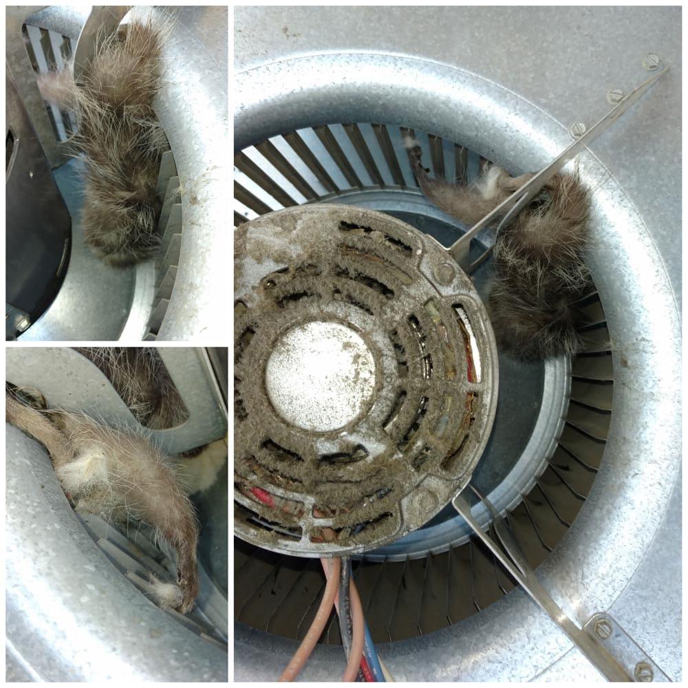 Residential Rodents Dead Rat Blower Fan