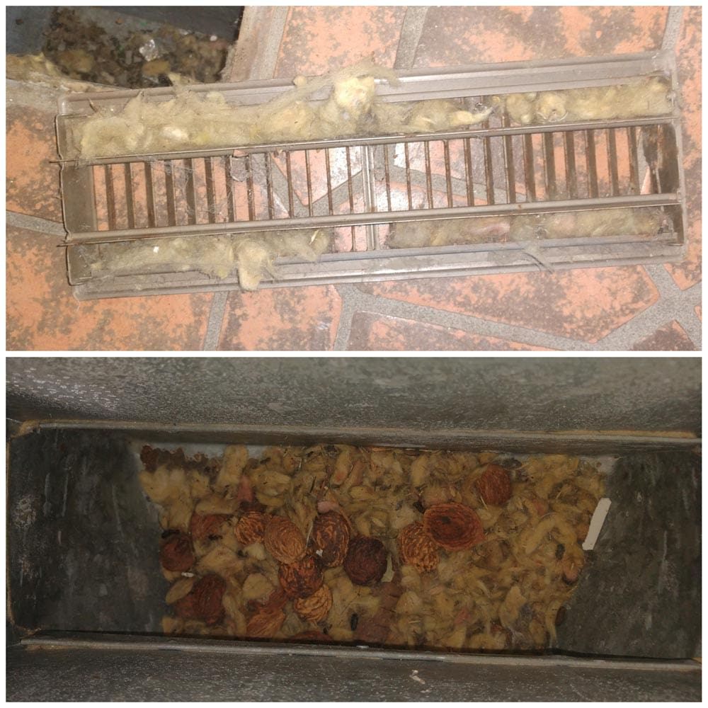 Residential Rodents Infiltration Insulation Nesting