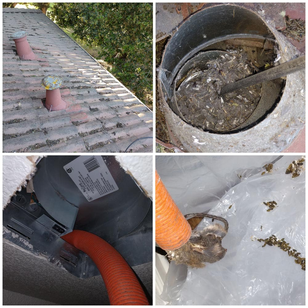 Residential Rodents Rat Feces Exhaust Fan