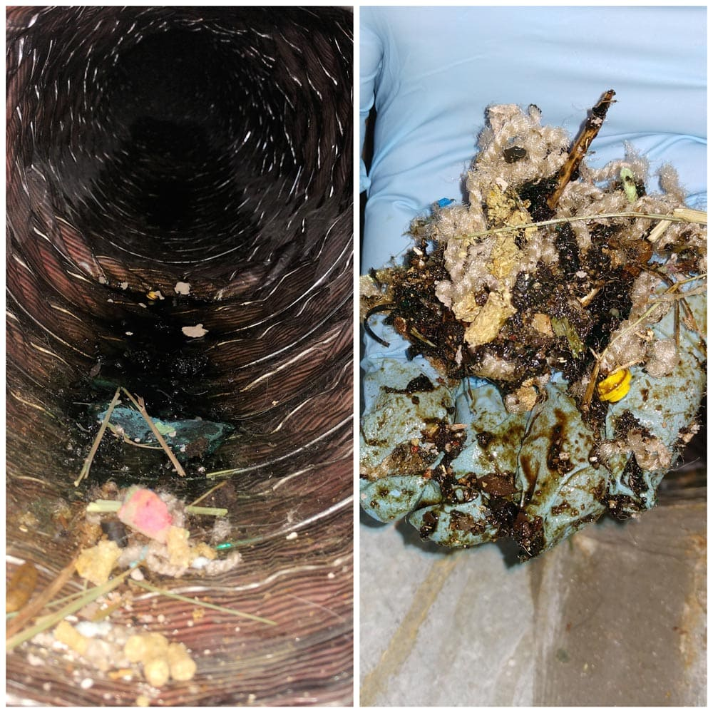 Residential Rodents Urine in Ductwork